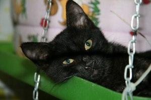 gatto11