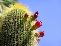 cactus imagesV543CC4I